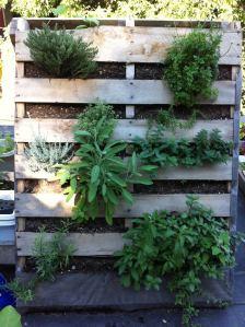 Rooftop Garden Herbs
