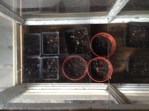 Waiting for things to germinate